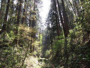 仁鮒水沢スギ植物群落保護林