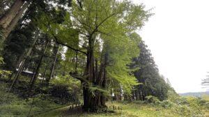 2021.10.19 銀杏山神社